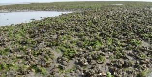 bank_met_ondermeer_kokkels_mosselen_en_japanse_oesters_in_de_waddenzee_bij_schiermonnikoog