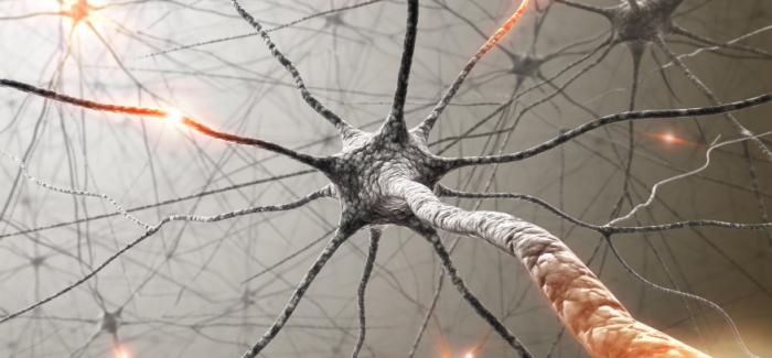 """Koen Hogenelst: """"De invloed van antidepressiva op gedrag is onderbelicht."""""""